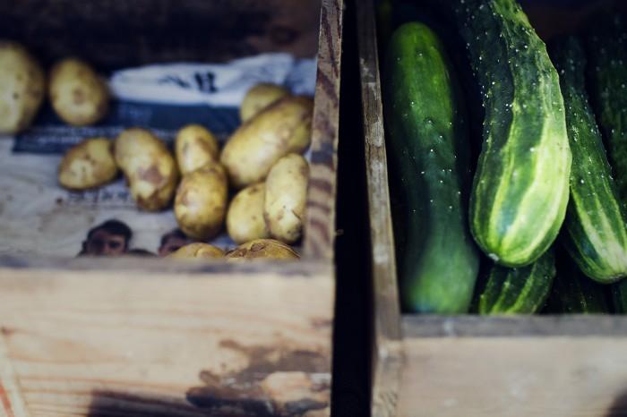 Självplock av ekologiska grönsaker