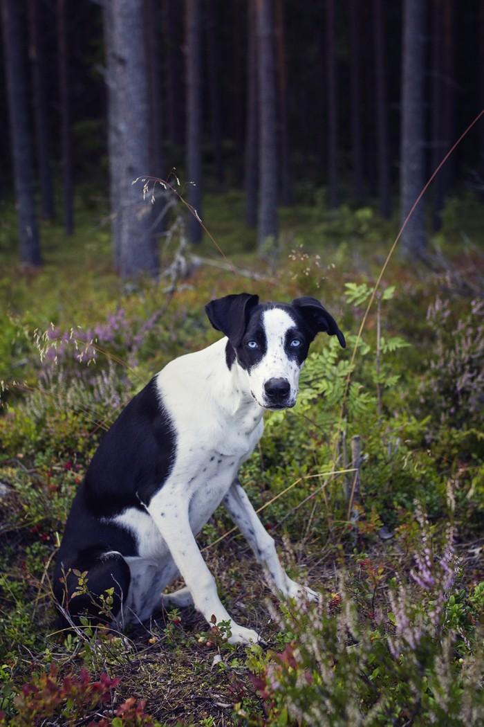 hunden-elsie
