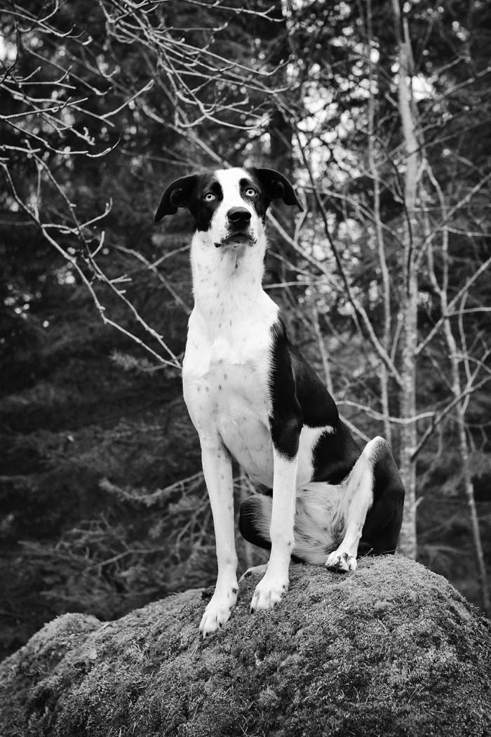 Hunden Elsie