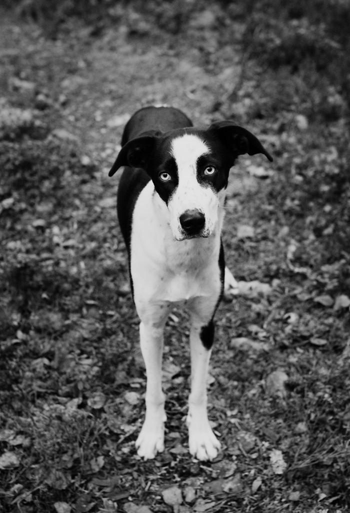 Hunden Elsie på skogspromenad - Evelinas Ekologiska