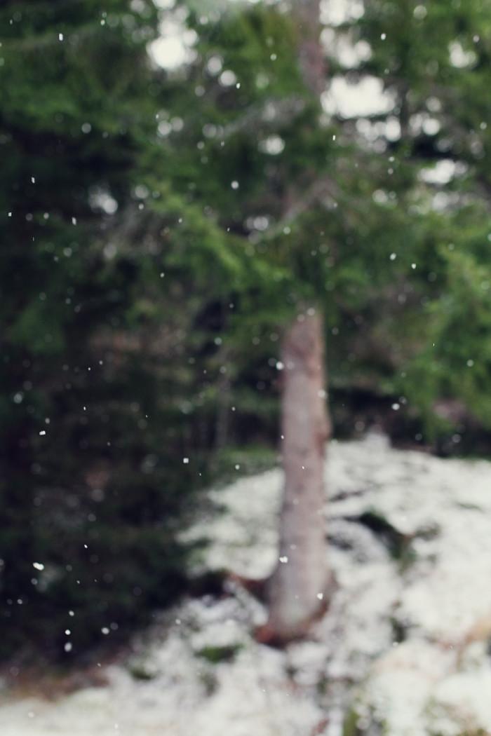 Stora Snöflingor i Januari