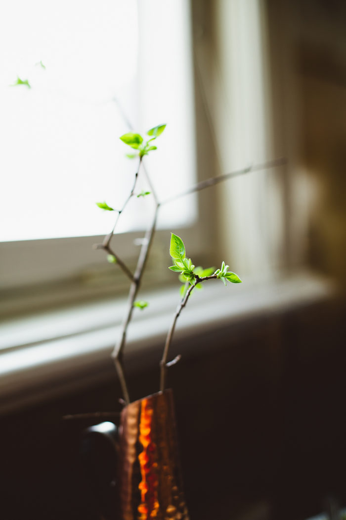 Kvist med gröna blad