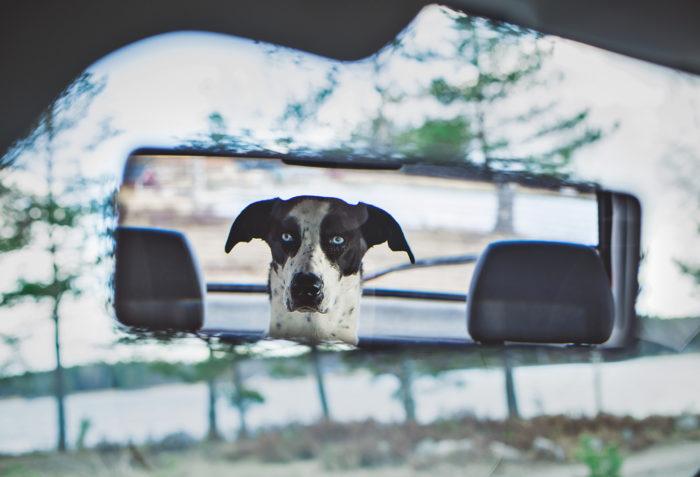Hunden Elsie i baksätet - Evelinas Ekologiska
